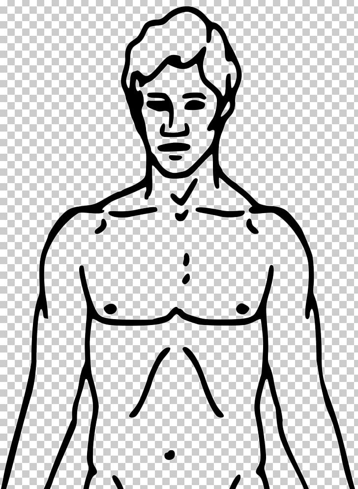Drawing Human Body Diagram Png Clipart Anatomy Arm Artwork Black Black And White Free Png Download