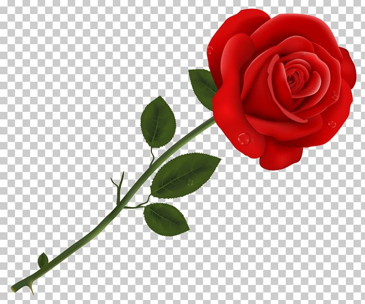 Lancaster Tea Red Rose Pizzeria Red Roses PNG, Clipart, Clipart, Cut Flowers, Floral Design, Flower, Flower Bouquet Free PNG Download
