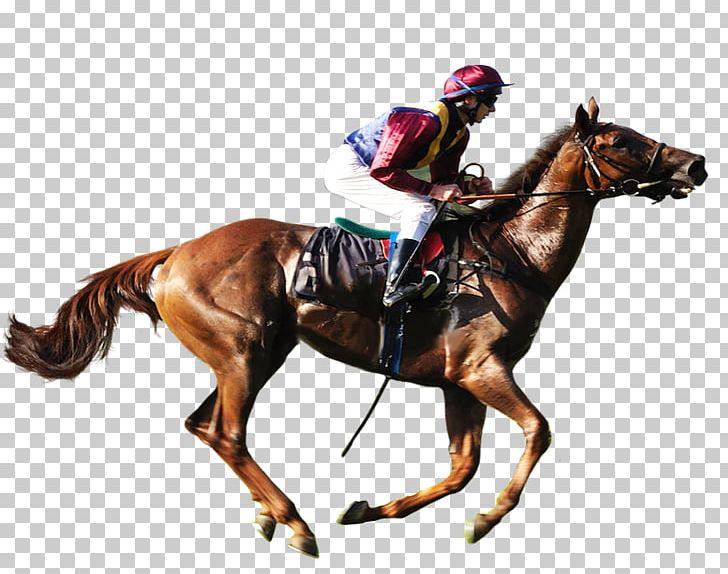 American Quarter Horse Equestrian Horse Racing Png Clipart