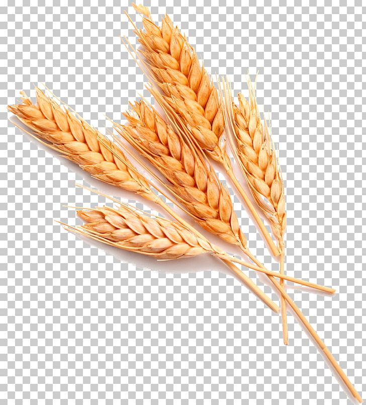 Wheat Stock Photography Food Ear Whole Grain PNG, Clipart, Bran, Cereal, Cereal Germ, Commodity, Dinkel Wheat Free PNG Download