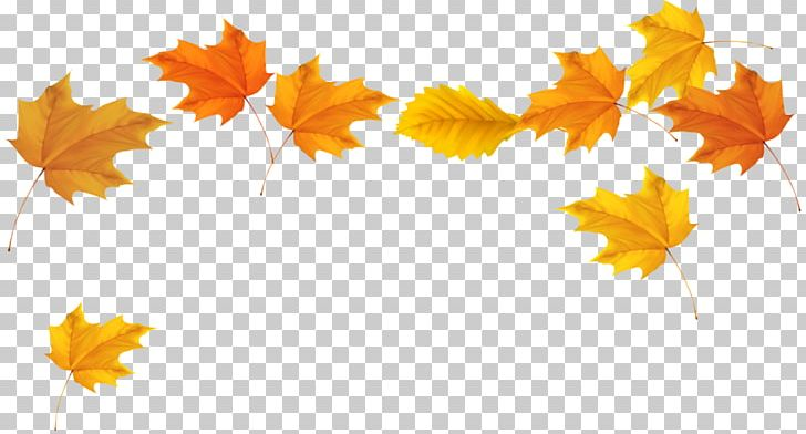 Autumn Leaf Color Desktop PNG, Clipart, Alpha Compositing, Autumn, Autumn Leaf Color, Branch, Computer Free PNG Download