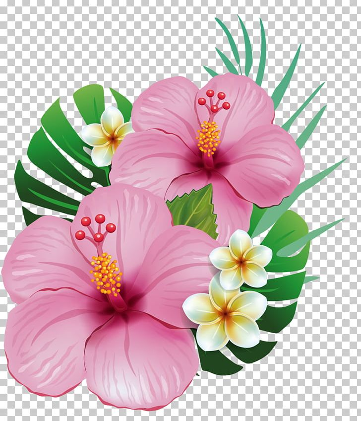 Hawaii Shoeblackplant Common Hibiscus Flower PNG, Clipart, Alstroemeriaceae, Annual Plant, Chinese Hibiscus, Clip, Color Free PNG Download
