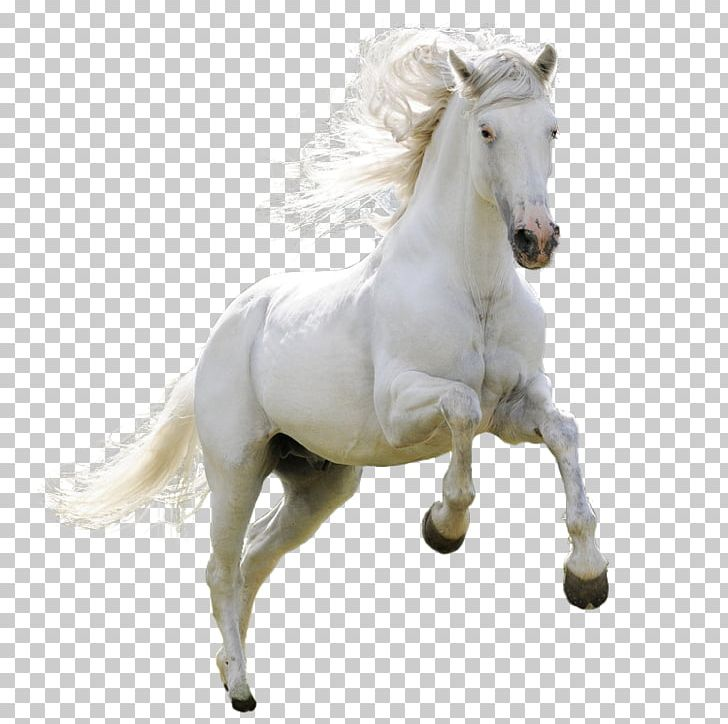 Mongolian Horse Arabian Horse Ferghana Horse Akhal-Teke Pony PNG, Clipart, 4k Resolution, Animals, Background White, Black White, Bridle Free PNG Download