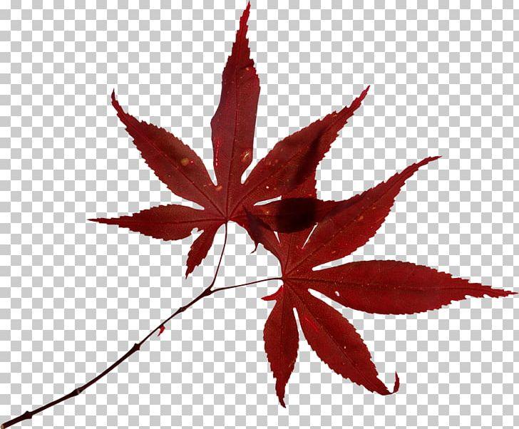 Autumn Leaf Color Autumn Leaf Color Fotolia PNG, Clipart, Autumn, Autumn Leaf Color, Fotolia, Green Leaves, Leaf Free PNG Download