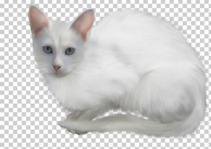 Kitten Turkish Angora Animal Polar Bear PNG, Clipart, Animal, Animals, Asian Semi Longhair, Balinese, Breed Free PNG Download
