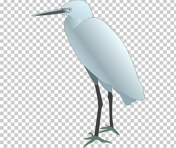 Snowy Egret Bird Drawing Png Clipart Animals Backward