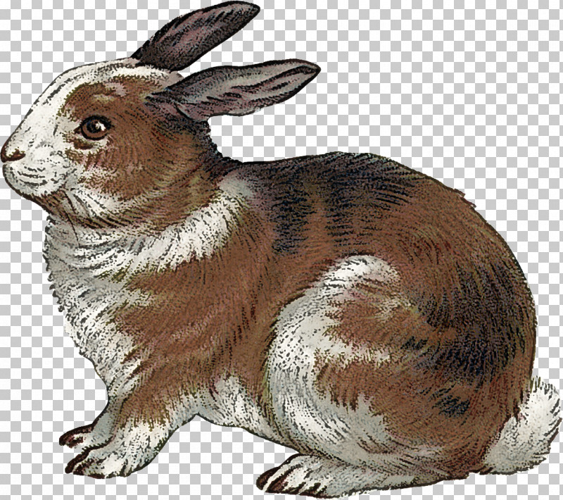 Rabbit Rabbits And Hares Hare Animal Figure Snowshoe Hare PNG, Clipart, Animal Figure, Brown Hare, Hare, Rabbit, Rabbits And Hares Free PNG Download