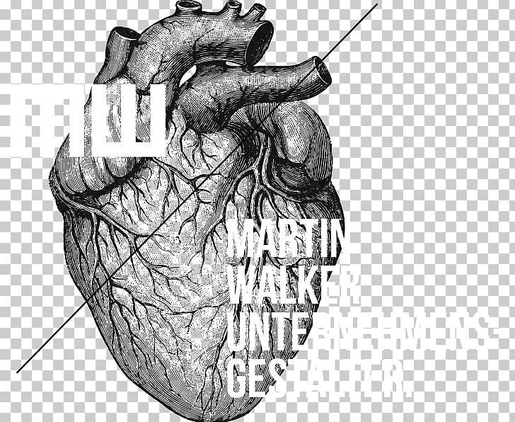 Heart Anatomy And Physiology II Lab Manual Drawing PNG