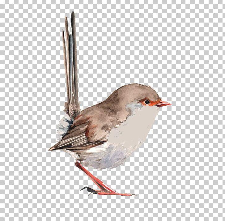 Wren Bird Watercolor Painting Drawing PNG, Clipart, Animals, Art, Artist, Balloon Cartoon, Beak Free PNG Download