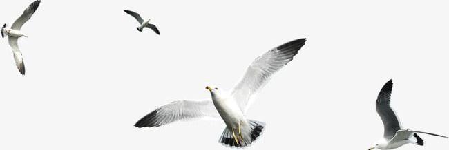 Flying Birds PNG, Clipart, Birds, Birds Clipart, Fly, Flying