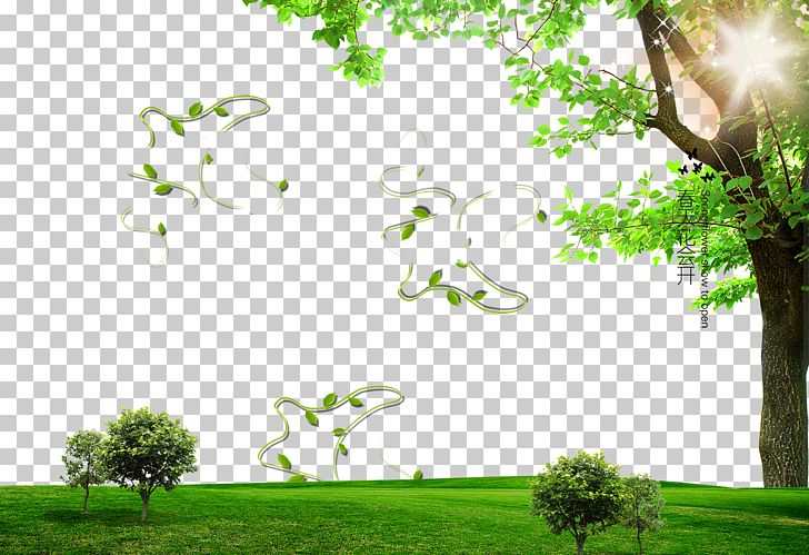 Photography PNG, Clipart, Advertisement Poster, Big Tree, Branch, Computer Wallpaper, Desktop Wallpaper Free PNG Download