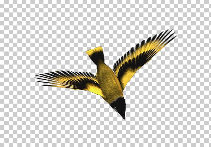 Bird Computer Icons Yellow-bellied Tit PNG, Clipart, Animals, Atmosphere, Beak, Bird, Birdie Free PNG Download