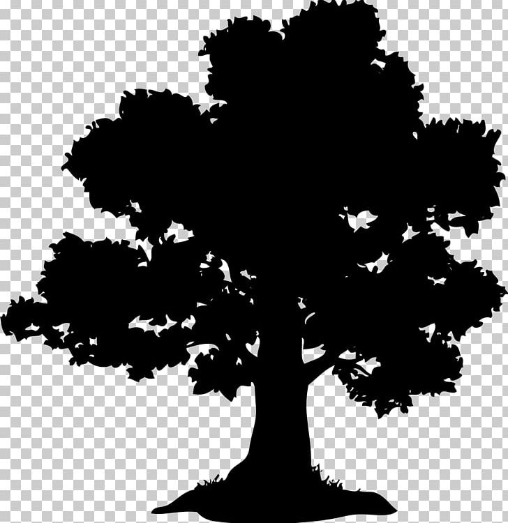 Oak Tree Chestnut Acorn PNG, Clipart, Acorn, Acorn Tree, Black And White, Branch, Chestnut Free PNG Download