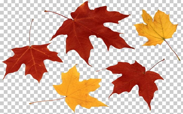 Maple Leaf Autumn Leaf Color PNG, Clipart, Autumn, Autumn Leaf Color, Autumn Leaves, Clip Art, Computer Icons Free PNG Download