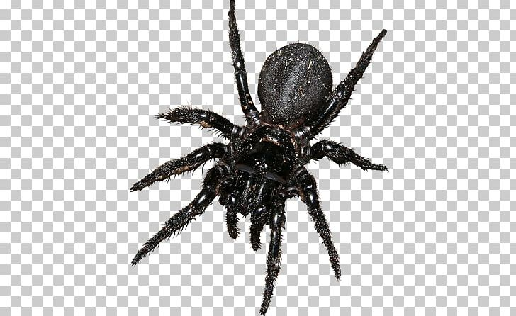 Spider barn. Png clipart u angulate