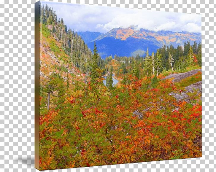 Mount Scenery Temperate Broadleaf And Mixed Forest National Park Vegetation Wilderness PNG, Clipart, Autumn, Autumn Price To, Biome, Broadleaved Tree, Ecosystem Free PNG Download