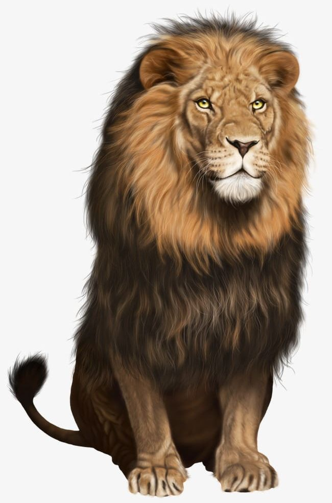 Lion sitting. Mighty ferocious png clipart