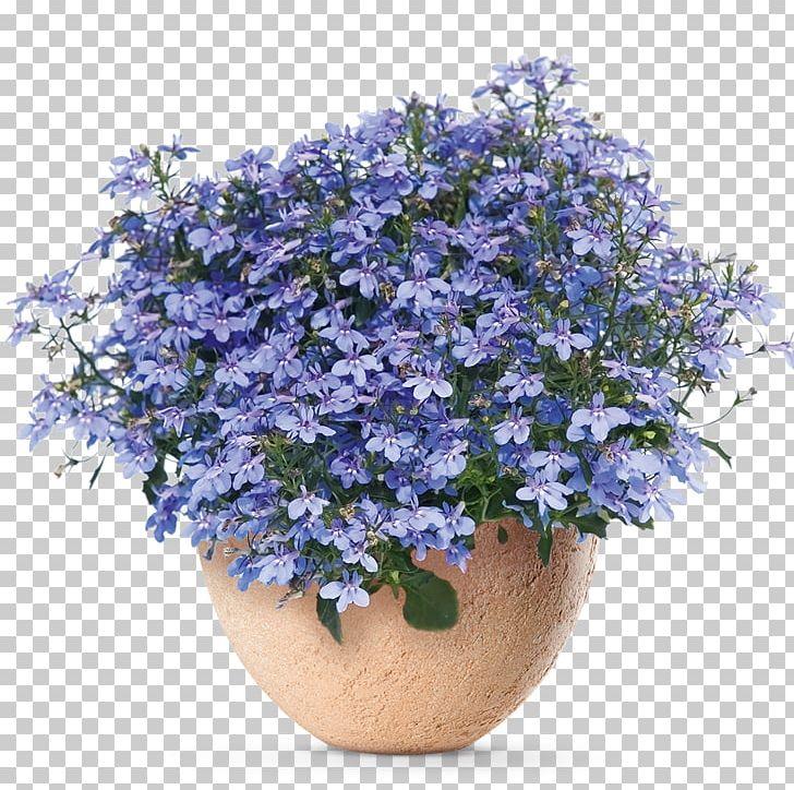 Lobelia Erinus Seed Annual Plant Flower Garden Png Clipart