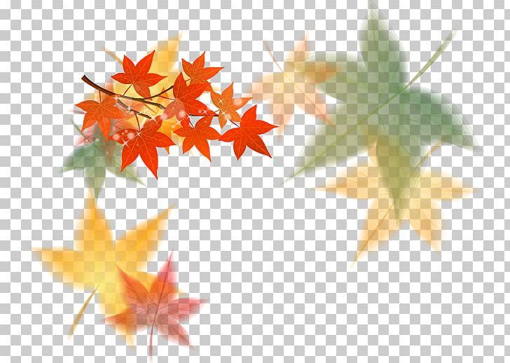 Fall leaves modern. Euclidean maple leaf png