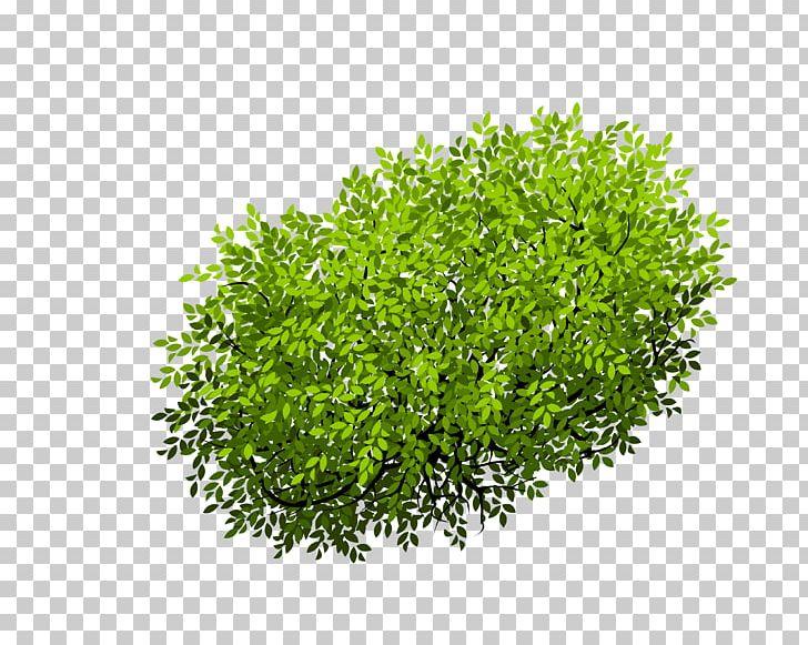 Euclidean Shrub Tree PNG, Clipart, Blueberry Bush, Bush, Bushes Top