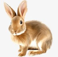 Rabbit PNG, Clipart, Animal, Animal Bunny, Bunny, Cute, Cute Bunny Free PNG Download