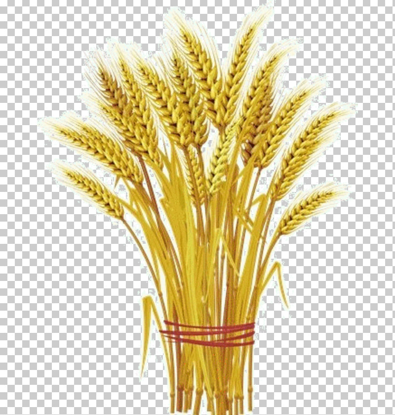 Wheat PNG, Clipart, Flower, Food Grain, Grass, Grass Family, Millet Free PNG Download