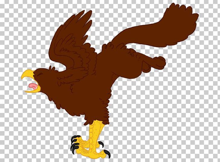 Bald Eagle Beak PNG, Clipart, Americans, Animals, Bald Eagle, Beak, Bird Free PNG Download