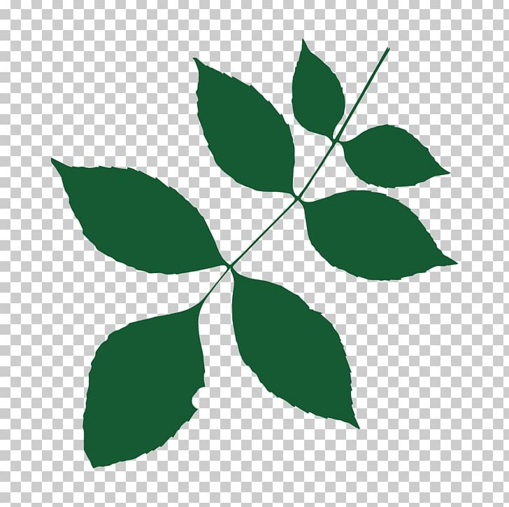 Heart Of England Forest Tree Branch Temperate Broadleaf And Mixed Forest PNG, Clipart, Birch, Branch, Broadleaved Tree, Collins British Tree Guide, Forest Free PNG Download