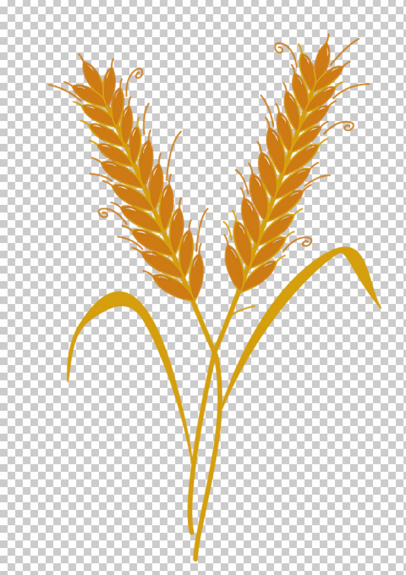 Wheat PNG, Clipart, Animation, Film Grain, Gold, Grain, Grasses Free PNG Download