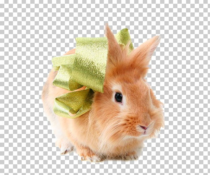 Domestic Rabbit Hare Animal PNG, Clipart, Animal, Bow, Bow And Arrow, Bows, Bow Tie Free PNG Download