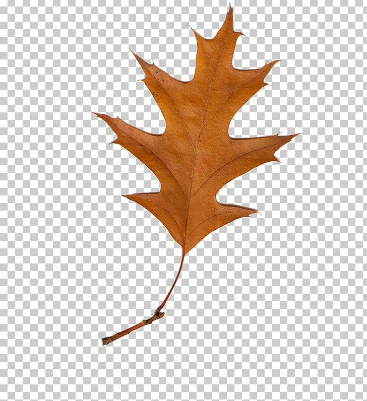Maple Leaf Autumn Leaves PNG, Clipart, Autumn, Autumn Leaf Color, Autumn Leaves, Deciduous, Gimp Free PNG Download