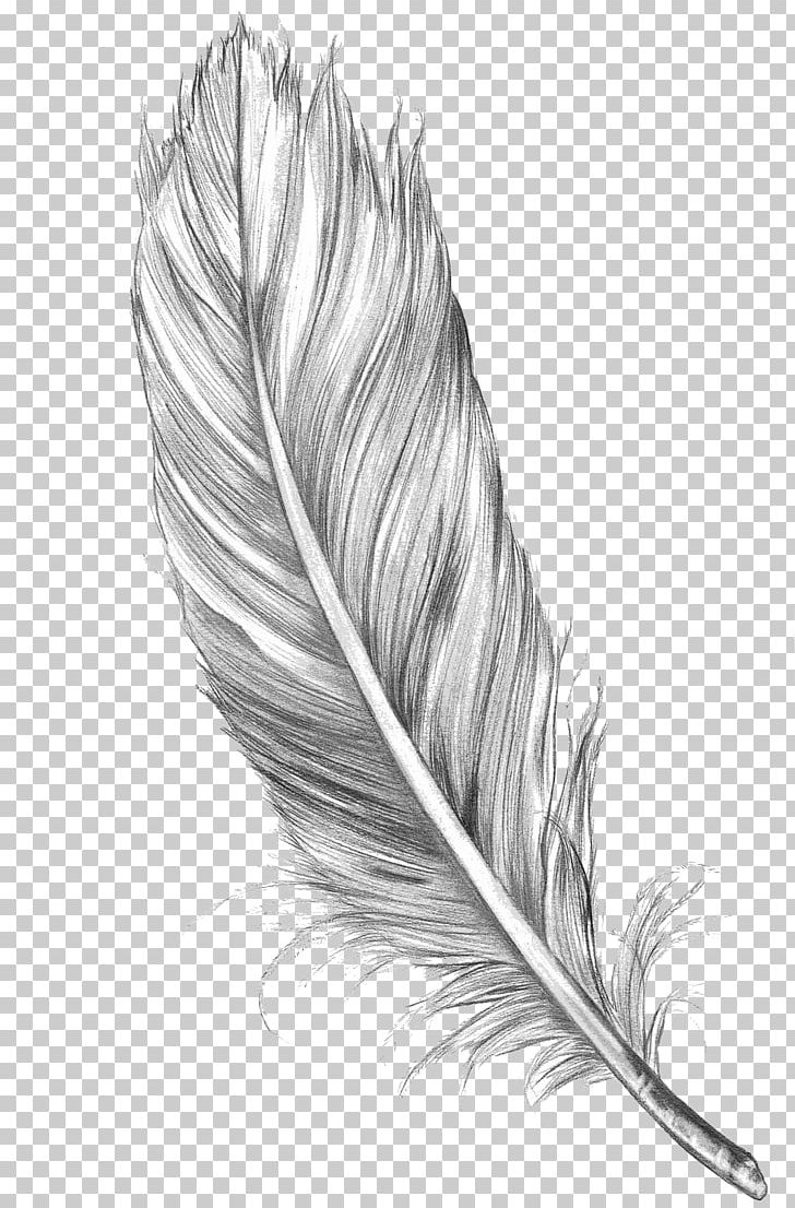Drawing Feather Bird Art Sketch PNG, Clipart, Animals, Art, Art Museum, Bird, Black And White Free PNG Download