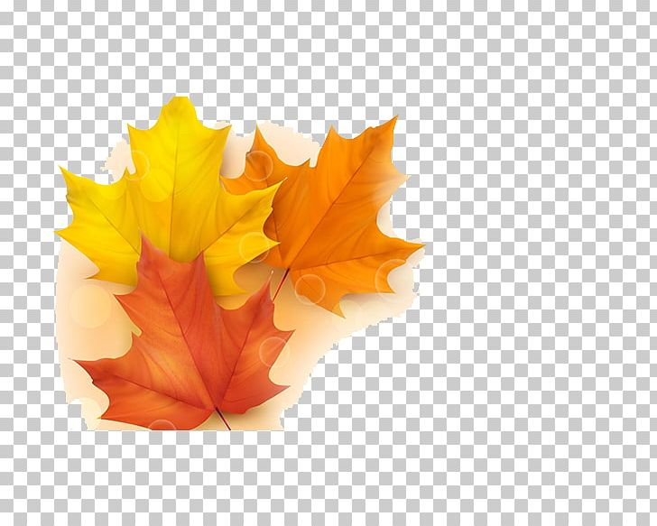 Autumn Leaf Color Illustration PNG, Clipart, Autumn, Autumn Leaf Color, Autumn Tree, Color, Drawing Free PNG Download