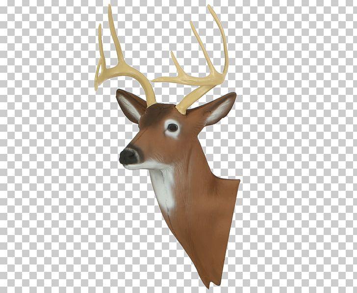 White-tailed Deer Reindeer Target Archery Antler PNG, Clipart, Animals, Antler, Archery, Arrow, Deer Free PNG Download