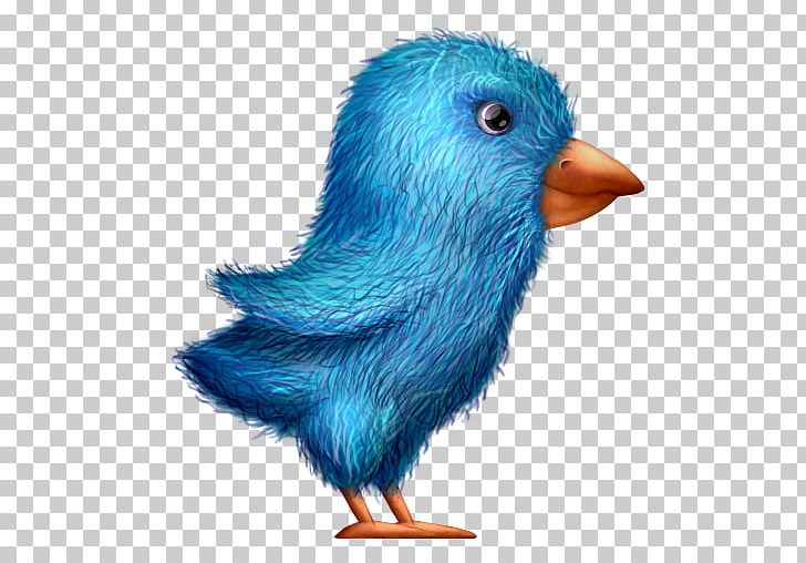Computer Icons PNG, Clipart, Beak, Bird, Chicken, Computer Icons, Computer Program Free PNG Download