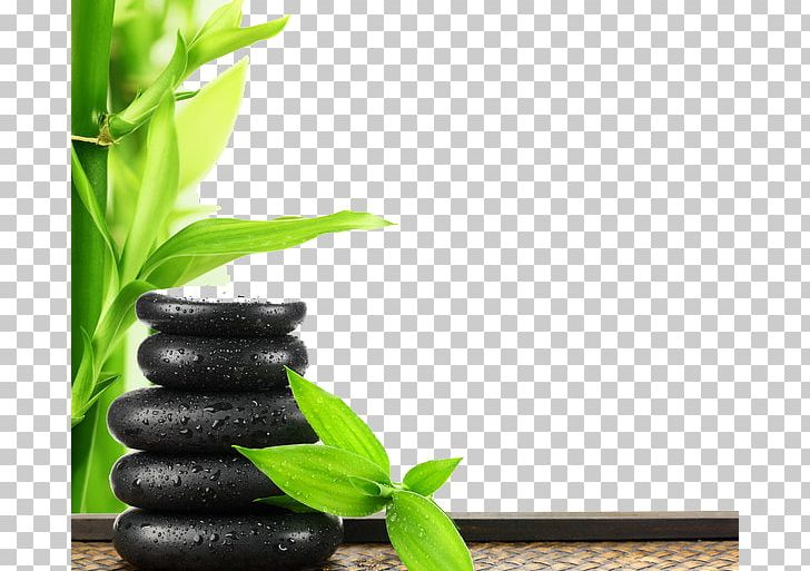 Enas European Day Spa Massage Beauty Parlour PNG, Clipart, Background Green, Computer Wallpaper, Eyelash Extensions, Face, ...