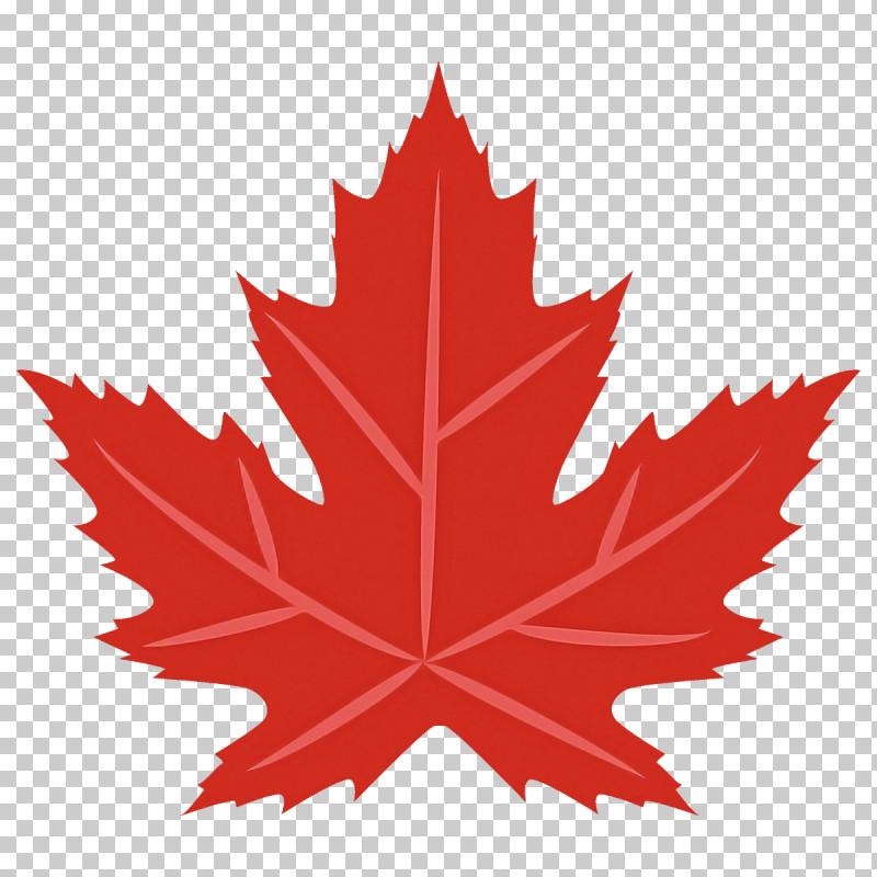 Maple Leaf Autumn Leaf Fall Leaf PNG, Clipart, Autumn Leaf, Black Maple, Deciduous, Fall Leaf, Flower Free PNG Download