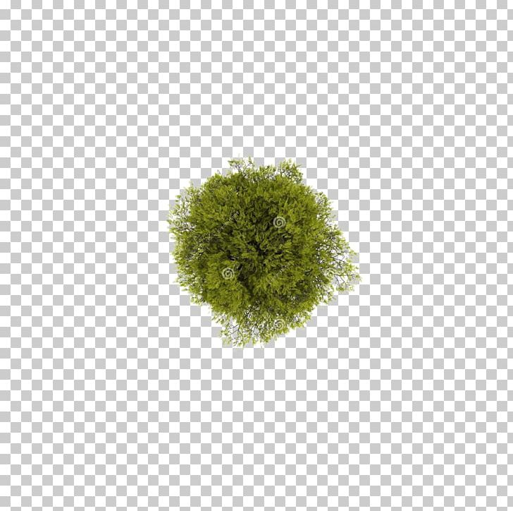 Tree Computer File PNG, Clipart, 2d Computer Graphics, Computer File, Download, Garden Furniture, Grass Free PNG Download