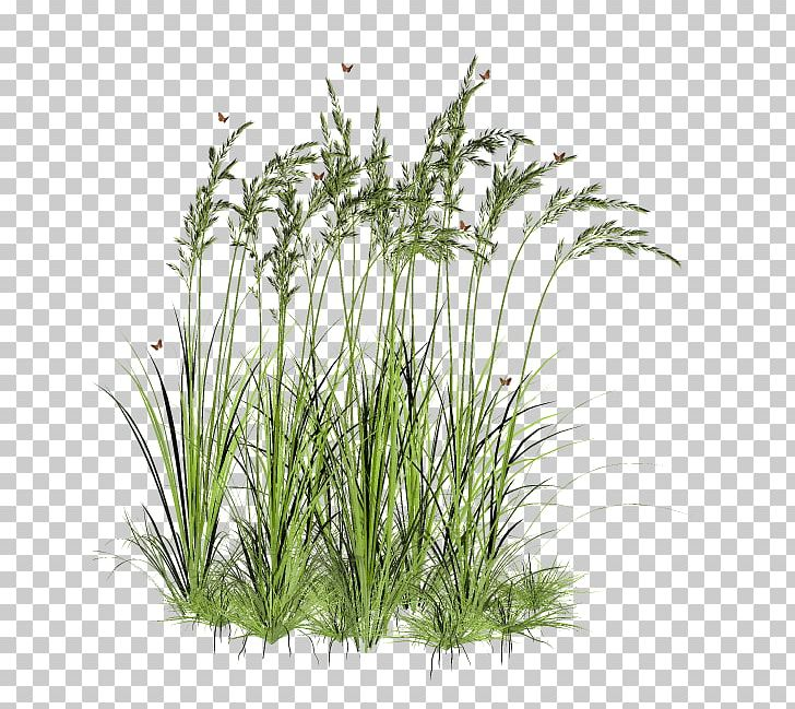 Tree Aquatic Plant PNG, Clipart, 3d Computer Graphics