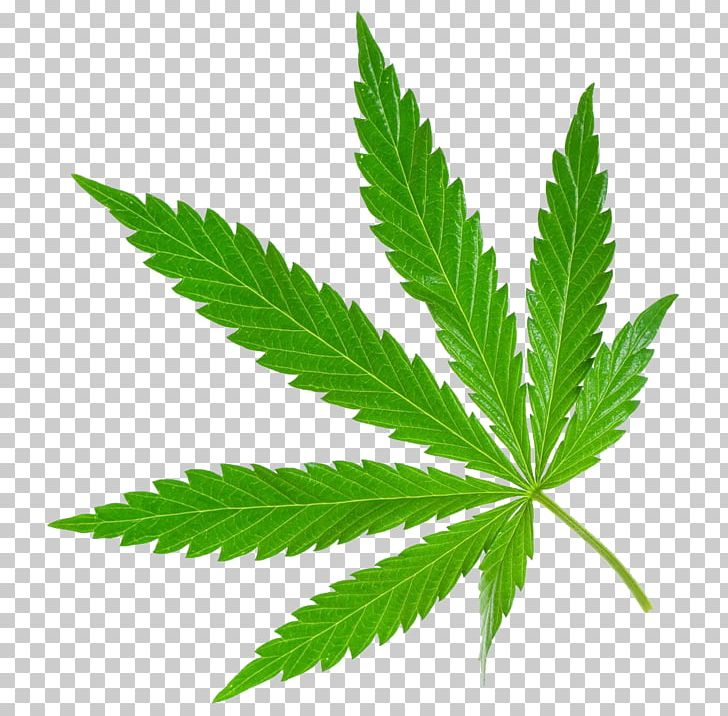 Medical Cannabis Legality Of Cannabis Cannabis Smoking Medical Marijuana Card PNG, Clipart, Banana Leaves, Care, Drug, Fall Leaves, Grass Free PNG Download
