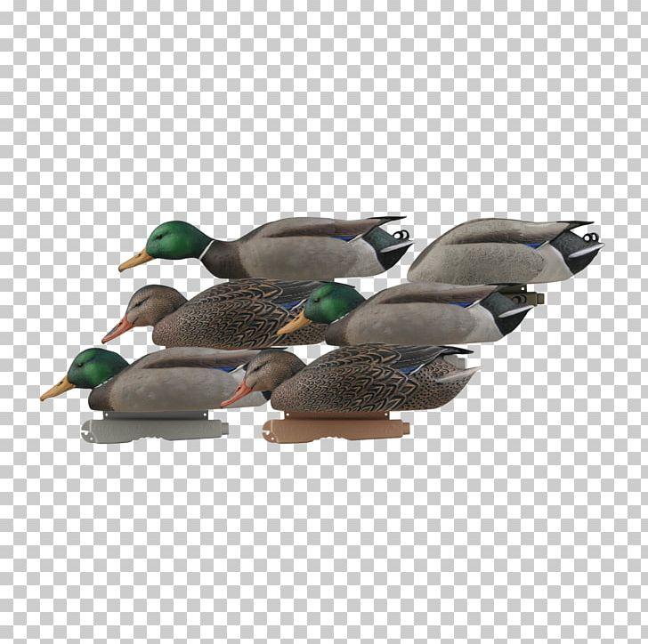 f56a8387 Mallard Duck Decoy Goose PNG, Clipart, Animals, Avery Dennison, Beak, Bird,  Com Free PNG Download