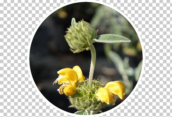 Nursery Shrub Garden Centre Treelet Deciduous PNG, Clipart, Baumschuler, Chokeberry, Deciduous, Evergreen, Flora Free PNG Download