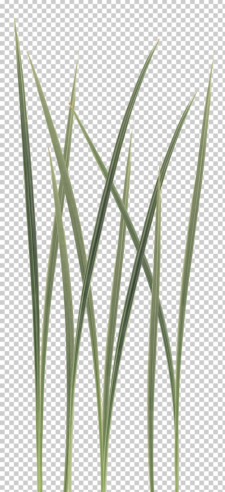 Texture Mapping SpeedTree Unreal Engine Unity Grasses PNG