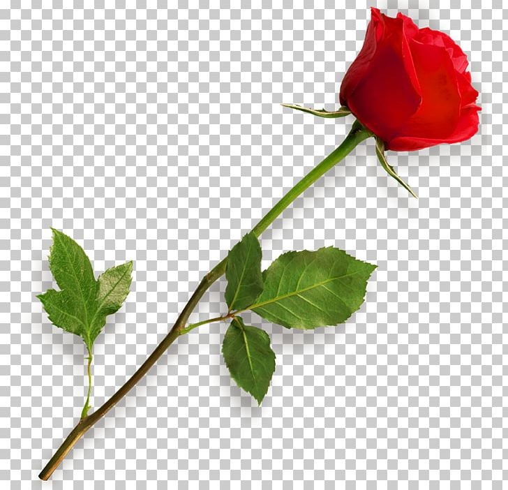 Rose Scalable Graphics PNG, Clipart, Bud, Clipart, Color, Computer Icons, Desktop Wallpaper Free PNG Download