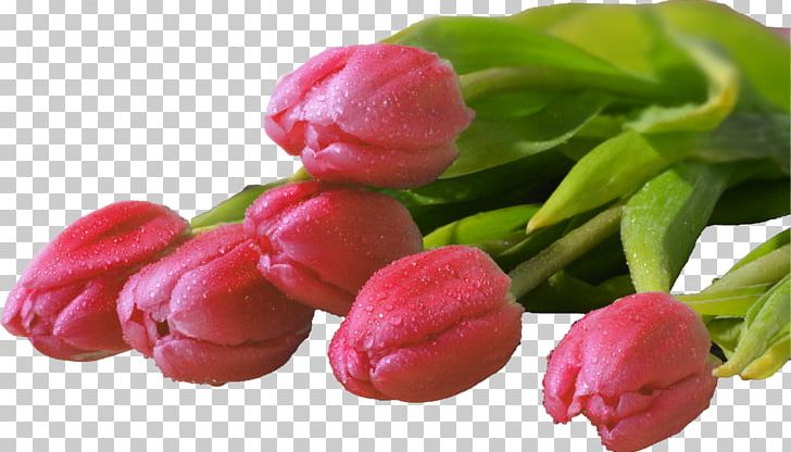Tulip Flower Bouquet Desktop Display Resolution PNG, Clipart, 8march, 720p, 1080p, Aspect Ratio, Bud Free PNG Download