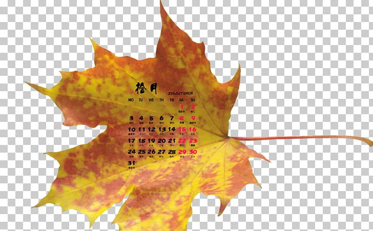 maple 16 for students free download
