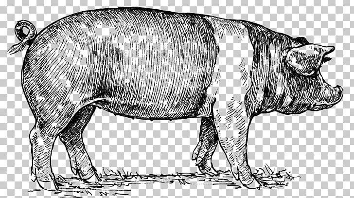 Berkshire Pig Hampshire Pig Drawing Png Clipart Berkshire