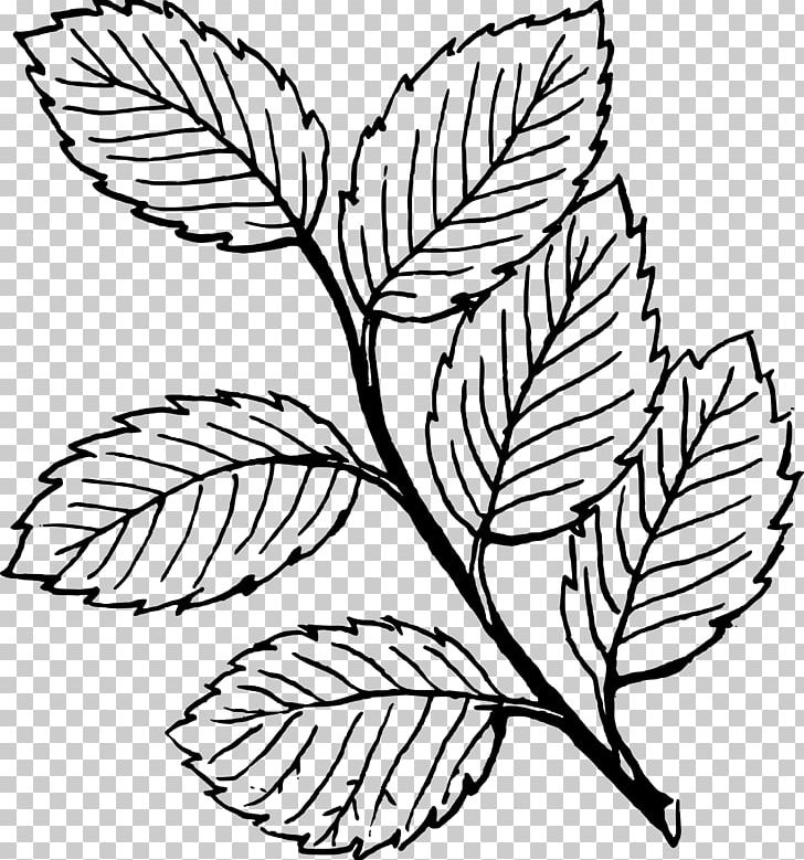 Look At Leaves Autumn Leaf Color Black And White PNG, Clipart, Acacia, Autumn, Black, Branch, Color Free PNG Download