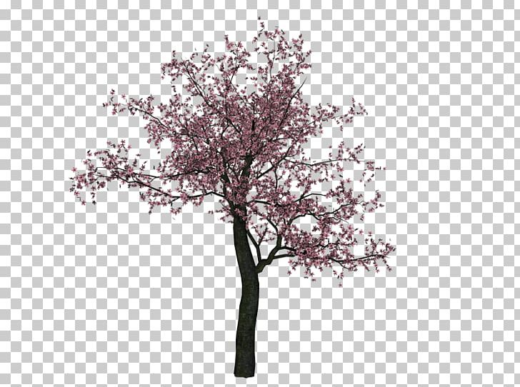Cherry Blossom Tree PNG, Clipart, Blossom, Branch, Cherry, Cherry Blossom, Desktop Wallpaper Free PNG Download