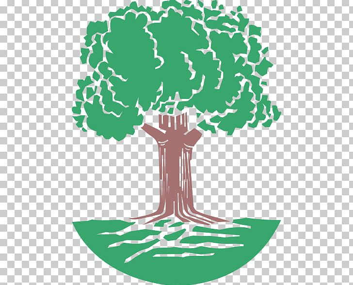 Tree Oak Giant Sequoia Coast Redwood Png Clipart Acorn Area Artwork Branch Cartoon Free Png Download They are in the cypress family cupressaceae. tree oak giant sequoia coast redwood